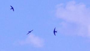 birds_sky